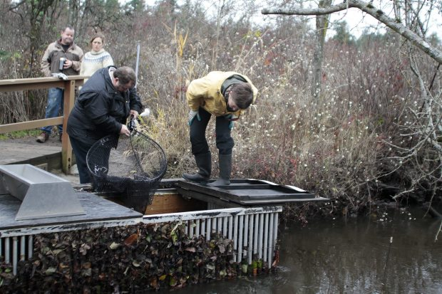 Chris Bos and Dorothy Chambers check for fish affected by the spill last month. (Nov. 2011)