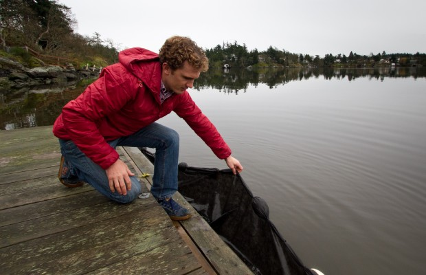 Bryson Robertson checks a curtain, made from landscape cloth and hung from a Portage Inlet dock, to see if any herring have spawned yet.