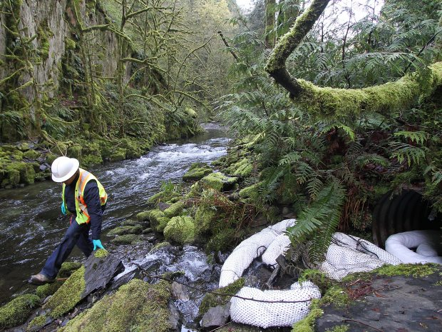 Environmental scientists survey the damage after a truck crash spilled fuel into Goldstream River last April.