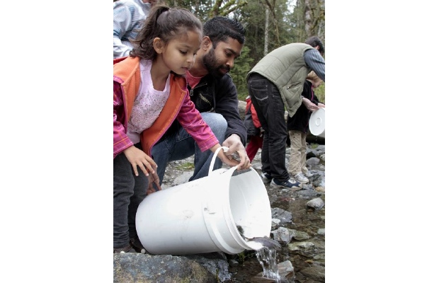 Four year Keira Pereira and her dad Elton help release some 3000 Coho smelt into the Goldstream river.