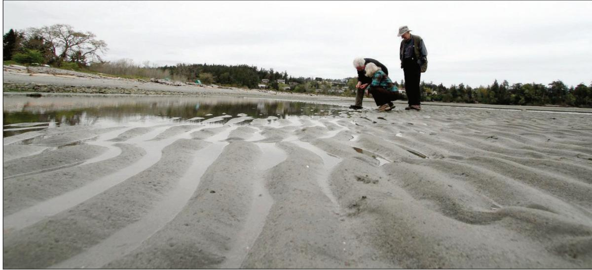 Andy McKinnon, left, Moralea Milne and Ken Luther search for life on Witty's Lagoon beach.