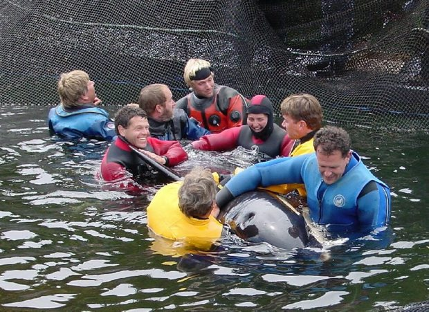 Springer is aided by a Vancouver Aquarium crew that helped to rehabilitate and release the orca in 2002.