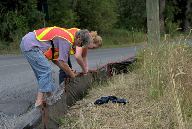 Volunteers set up a barrier to protect migrating western toads from crossing a road in the Cowichan Valley.