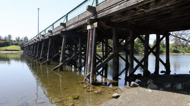 Olympia oysters, which are native to B.C. but rarely found in the wild, are nestled on the seabed of the Gorge waterway and cling to the pilings of the 78-year-old Craigflower Bridge, which is being replaced in a $10.8-million project.