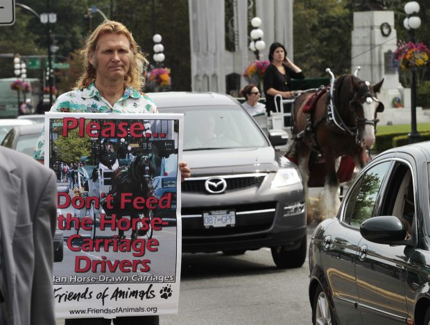 Al Reford, horse advocate, wants an end to horse labour, as he protests on Belleville Street